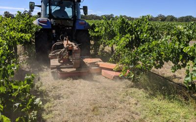 No more herbcide in our vineyard